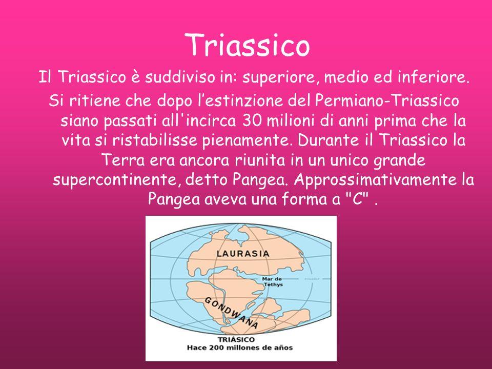 Triassico Il Triassico è suddiviso in: superiore, medio ed inferiore. Si ritiene che dopo lestinzione del Permiano-Triassico siano passati all'incirca