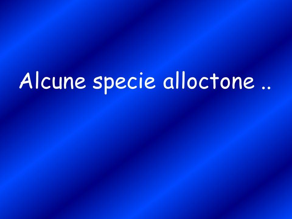 Alcune specie alloctone..