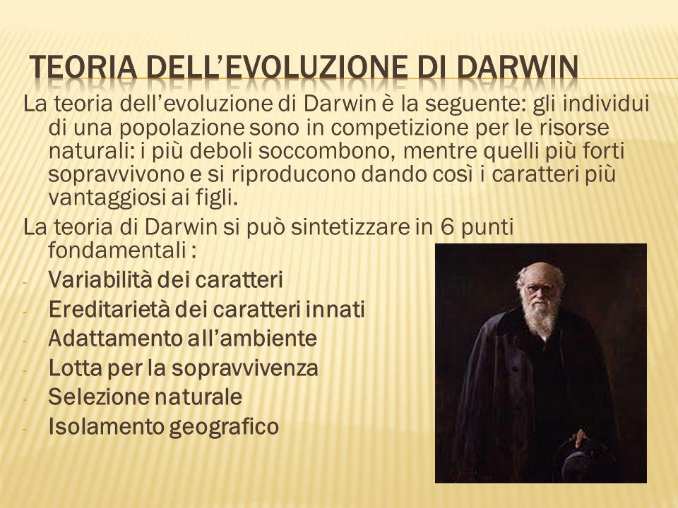 La teoria dellevoluzione di Darwin è la seguente: gli individui di una popolazione sono in competizione per le risorse naturali: i più deboli soccombo