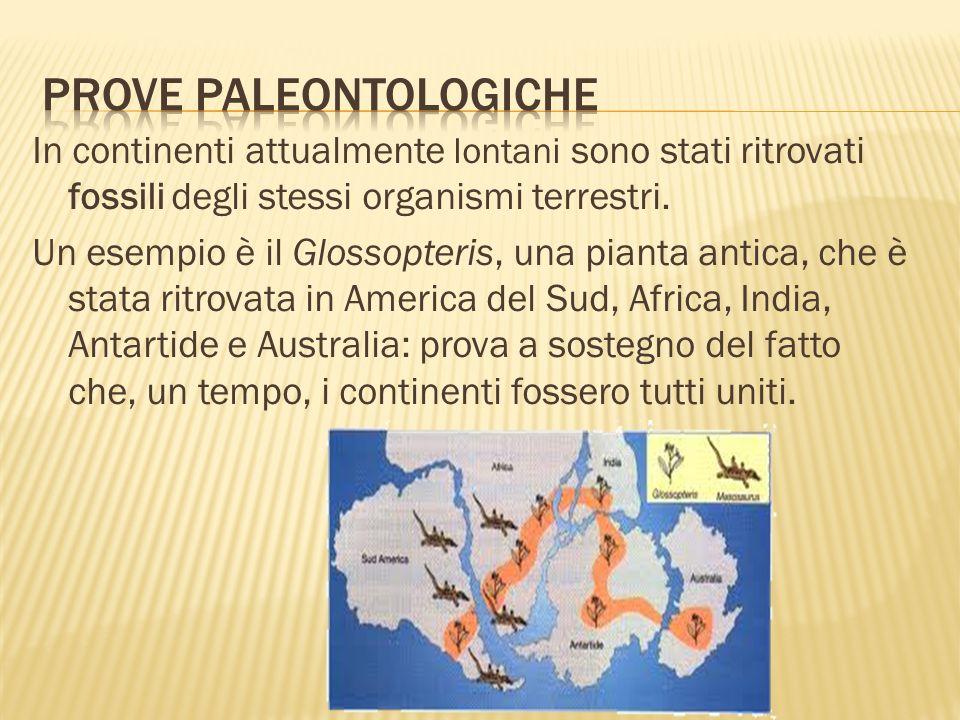 In continenti attualmente lontani sono stati ritrovati fossili degli stessi organismi terrestri. Un esempio è il Glossopteris, una pianta antica, che
