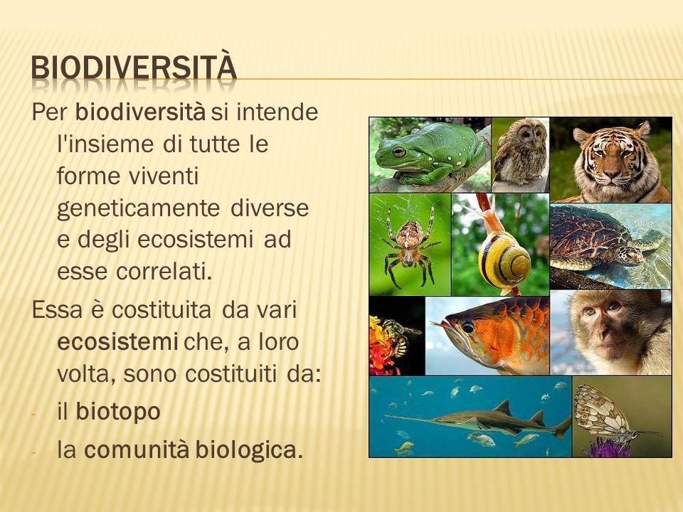 Per biodiversità si intende l'insieme di tutte le forme viventi geneticamente diverse e degli ecosistemi ad esse correlati. Essa è costituita da vari