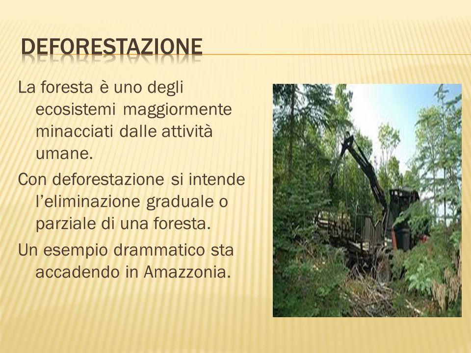 La foresta è uno degli ecosistemi maggiormente minacciati dalle attività umane. Con deforestazione si intende leliminazione graduale o parziale di una