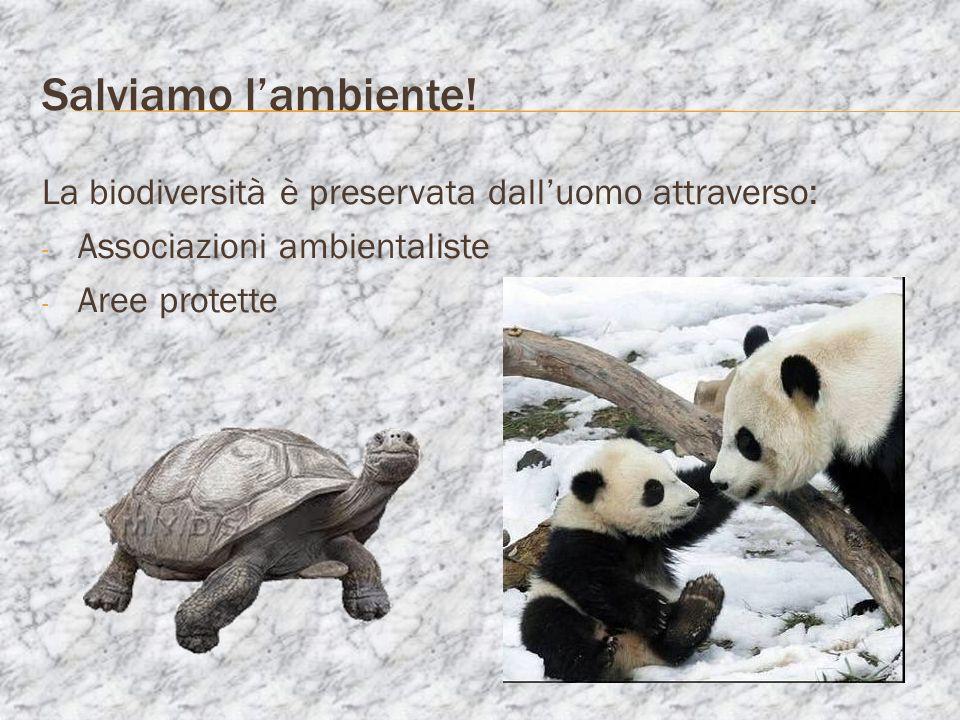 Salviamo lambiente! La biodiversità è preservata dalluomo attraverso: - Associazioni ambientaliste - Aree protette
