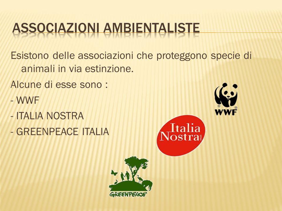 Esistono delle associazioni che proteggono specie di animali in via estinzione. Alcune di esse sono : - WWF - ITALIA NOSTRA - GREENPEACE ITALIA