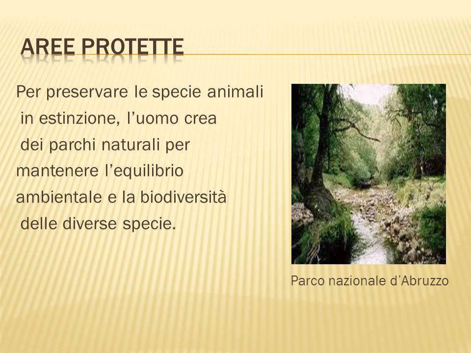 Per preservare le specie animali in estinzione, luomo crea dei parchi naturali per mantenere lequilibrio ambientale e la biodiversità delle diverse sp