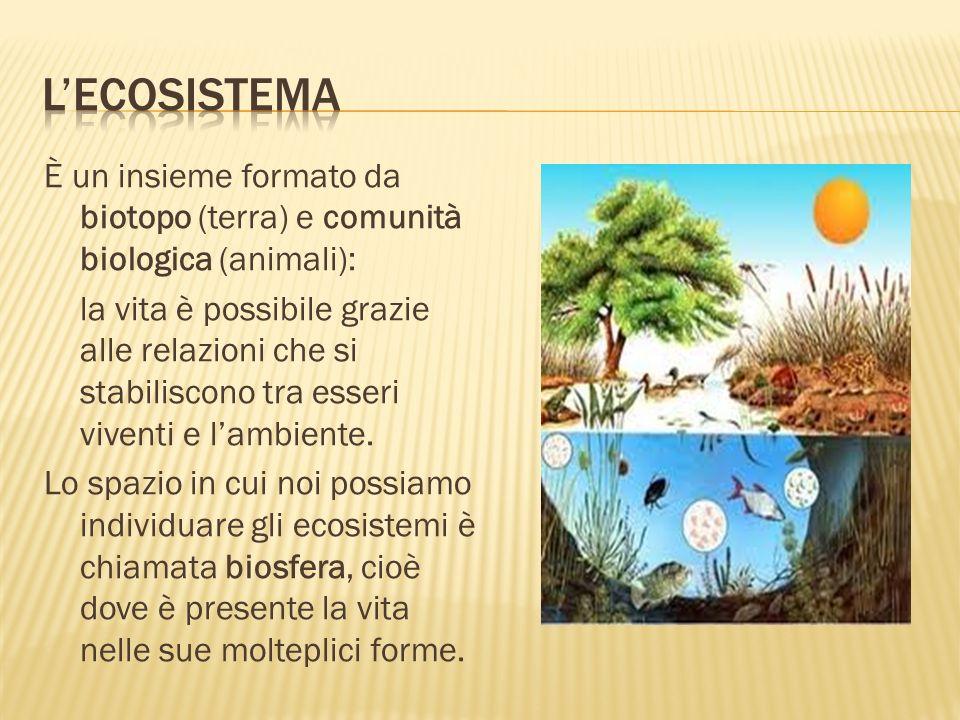 È un insieme formato da biotopo (terra) e comunità biologica (animali): la vita è possibile grazie alle relazioni che si stabiliscono tra esseri viven