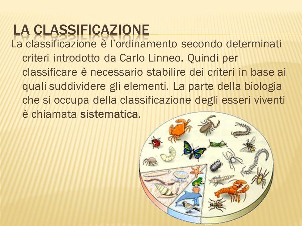 Oggi gli esseri viventi vengono classificati in cinque grandi regni: - Monere - Protisti - Funghi - Piante - Animali