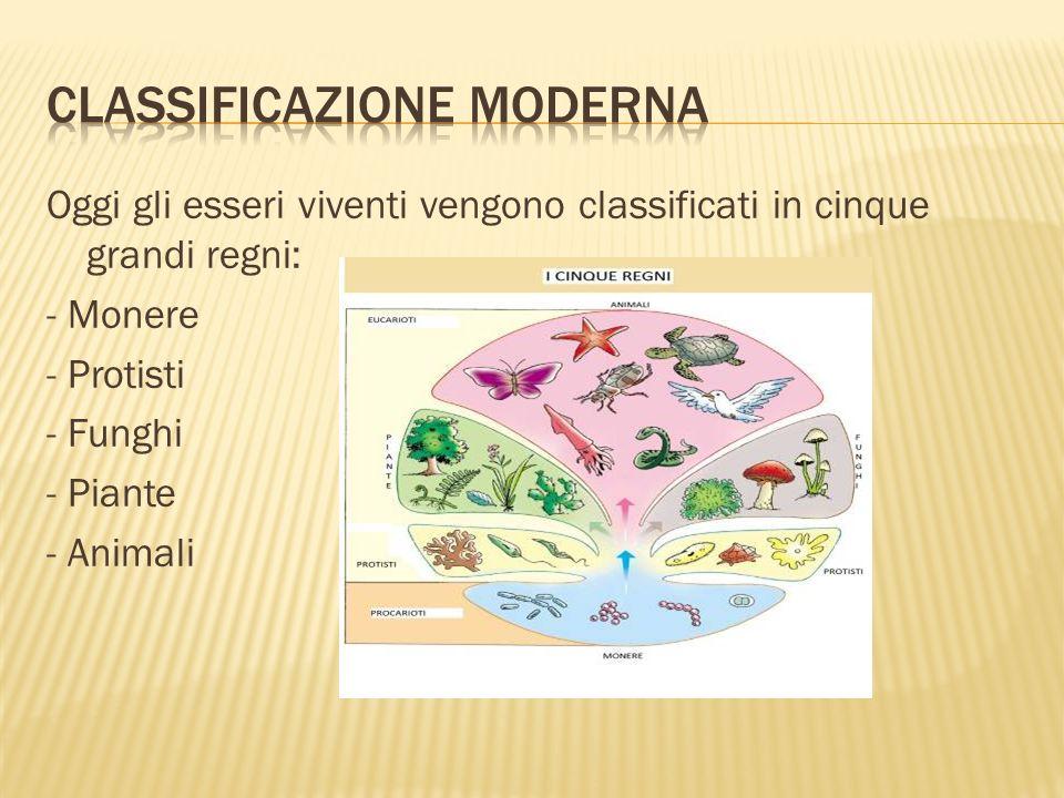 La biodiversità è minacciata da tre concetti fondamentali : - Estinzioni - Fenomeni naturali - Azioni delluomo (impatto antropico)
