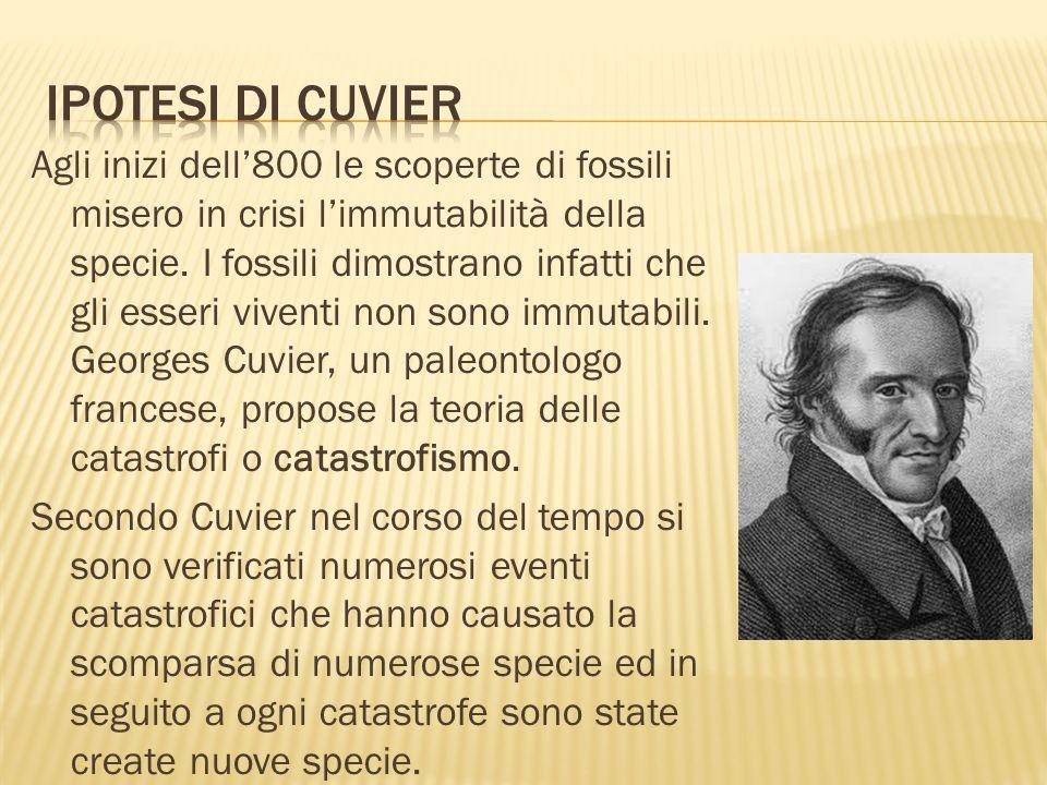 Agli inizi dell800 le scoperte di fossili misero in crisi limmutabilità della specie. I fossili dimostrano infatti che gli esseri viventi non sono imm