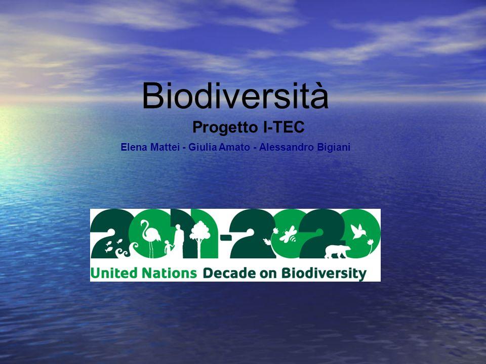 Biodiversità Progetto I-TEC Elena Mattei - Giulia Amato - Alessandro Bigiani