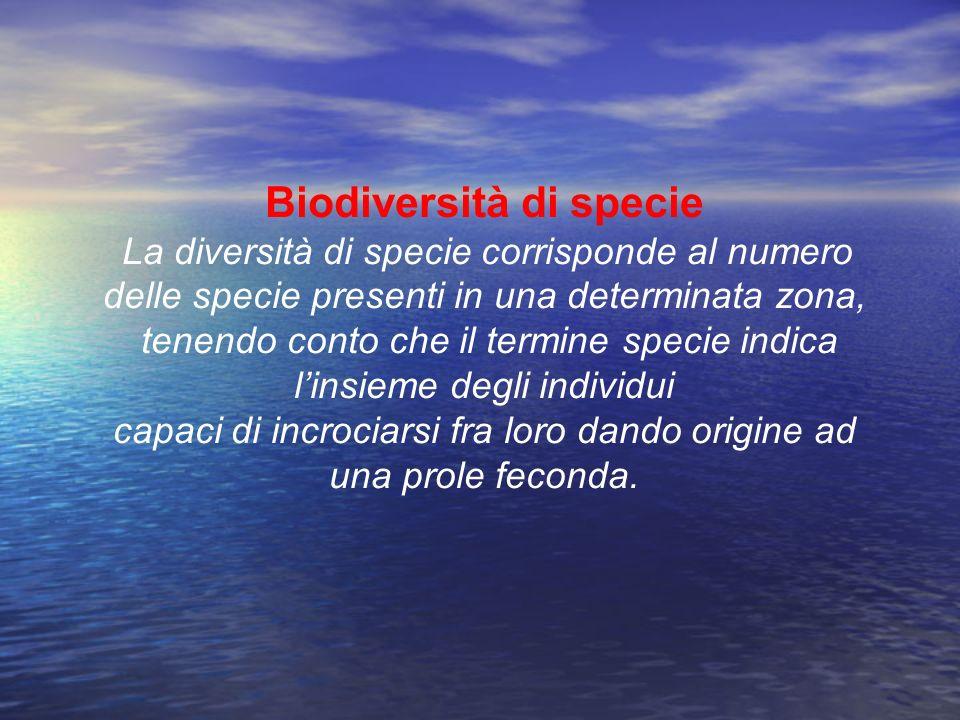 Biodiversità di specie La diversità di specie corrisponde al numero delle specie presenti in una determinata zona, tenendo conto che il termine specie