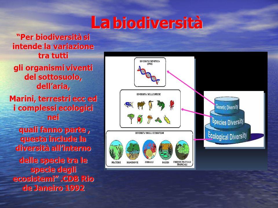 Per biodiversità si intende la variazione tra tutti gli organismi viventi del sottosuolo, dellaria, Marini, terrestri ecc ed i complessi ecologici nei