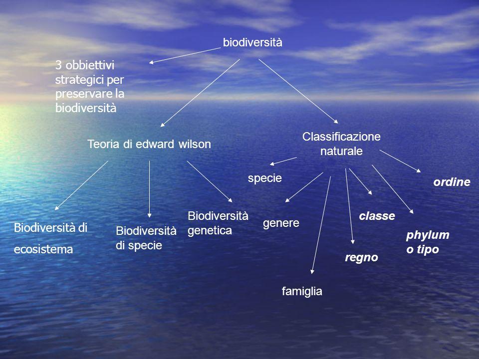 biodiversità Teoria di edward wilson Classificazione naturale specie genere famiglia regno classe phylum o tipo ordine Biodiversità di specie Biodiver
