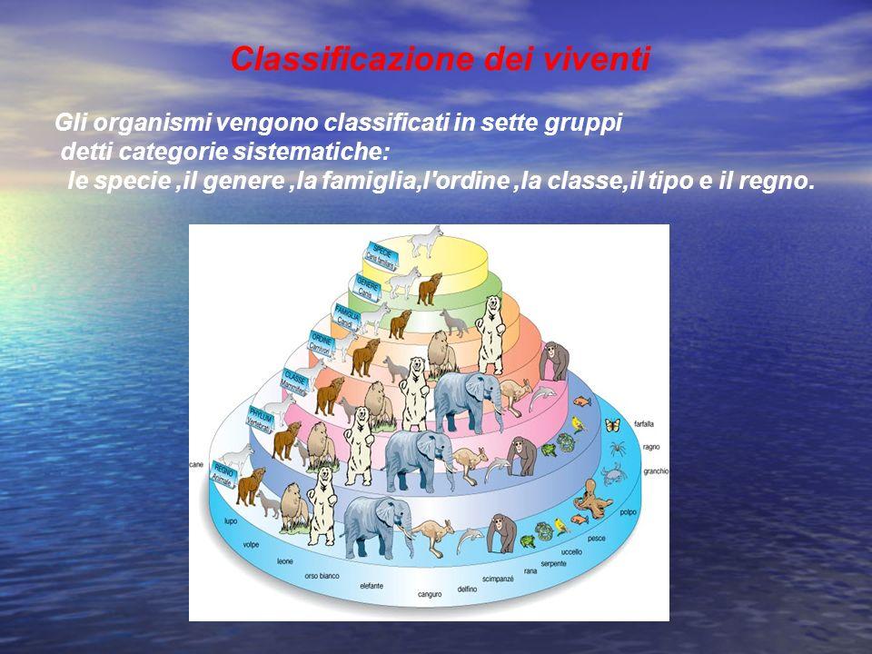 Classificazione dei viventi Gli organismi vengono classificati in sette gruppi detti categorie sistematiche: le specie,il genere,la famiglia,l'ordine,