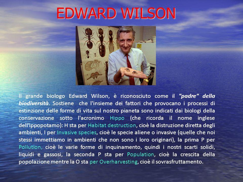 EDWARD WILSON ll grande biologo Edward Wilson, è riconosciuto come il