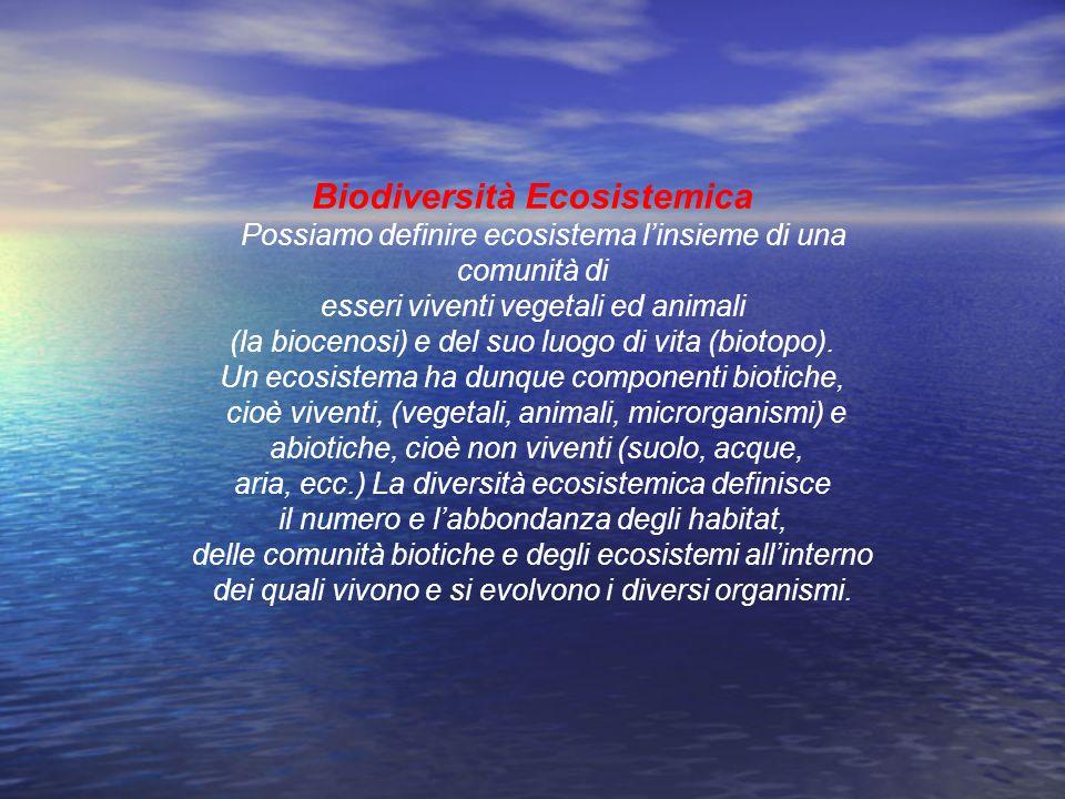 Biodiversità Ecosistemica Possiamo definire ecosistema linsieme di una comunità di esseri viventi vegetali ed animali (la biocenosi) e del suo luogo d