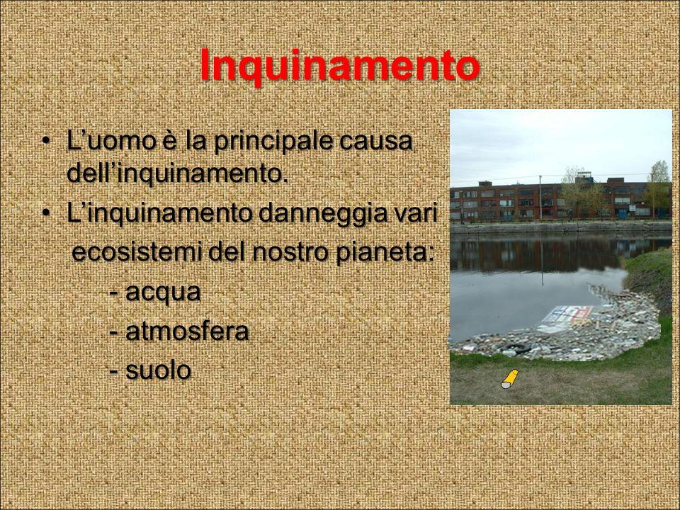 Inquinamento delle acque Le principali cause sono: - Le industrie - Gli allevamenti - L agricoltura