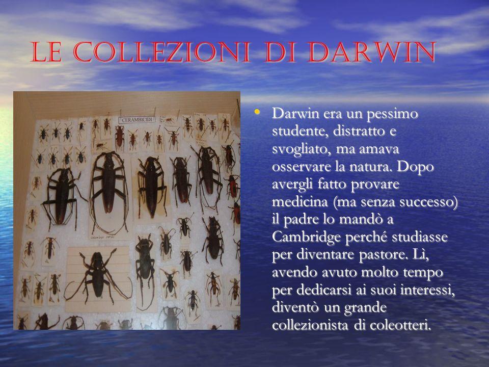 Le collezioni di Darwin Darwin era un pessimo studente, distratto e svogliato, ma amava osservare la natura.