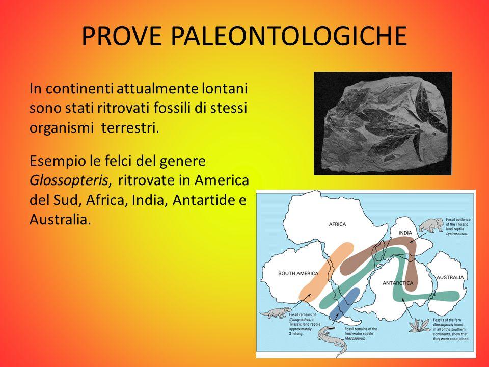 PROVE PALEOCLIMATICHE Nelle rocce ritrovate in America del Sud, Africa, India e Australia, Wegener dimostrò che questi continenti erano stati ricoperti, nel Paleozoico, da una calotta glaciale, quindi erano molto più a sud rispetto alla loro posizione attuale.