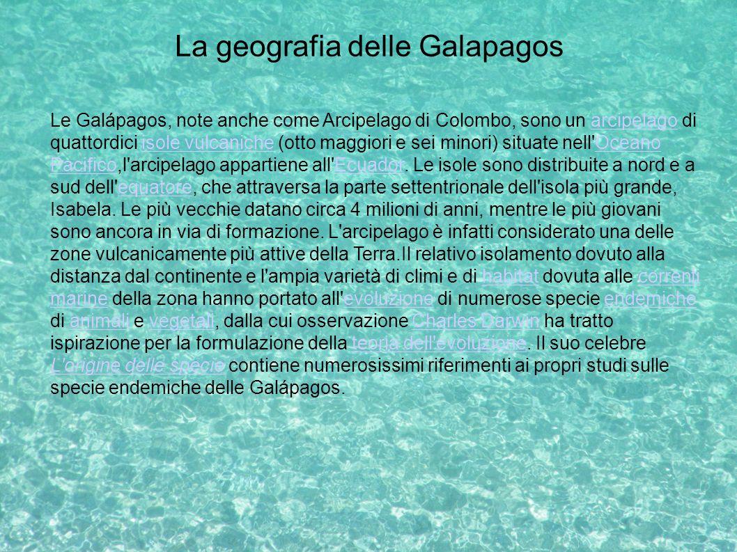 La geografia delle Galapagos Le Galápagos, note anche come Arcipelago di Colombo, sono un arcipelago di quattordici isole vulcaniche (otto maggiori e