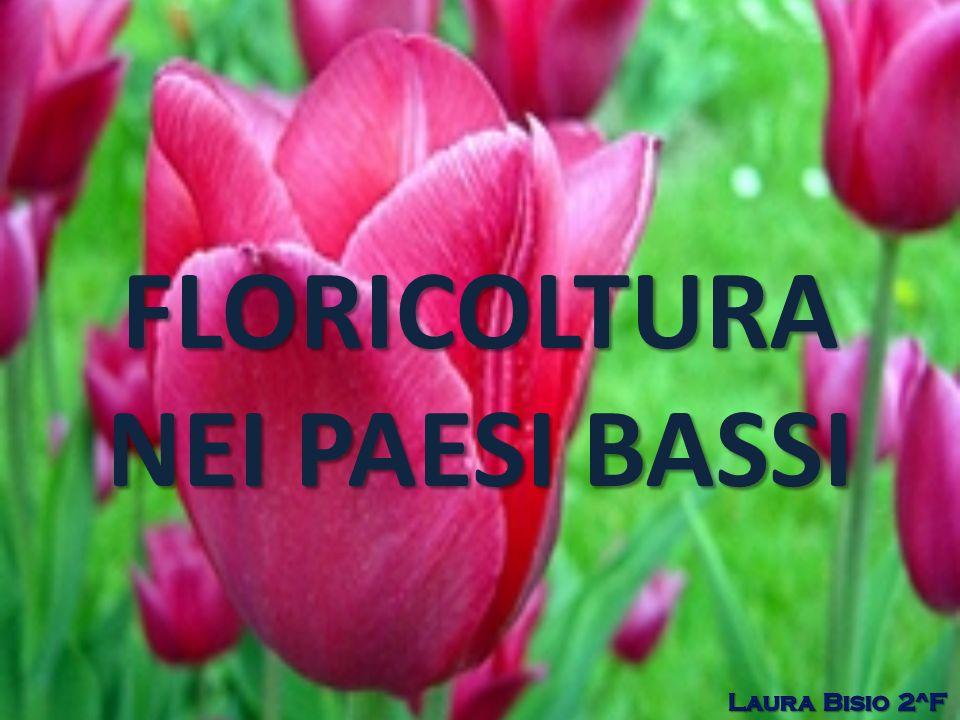 FONTI www.wikipedia.it www.olanda.cc/lisse.htlm www.saladelcembalo.org www.olanda.cc/tulipani-olandesi-e-la-globalizzazione.htlm www.treccani.it www.coldiretti.it
