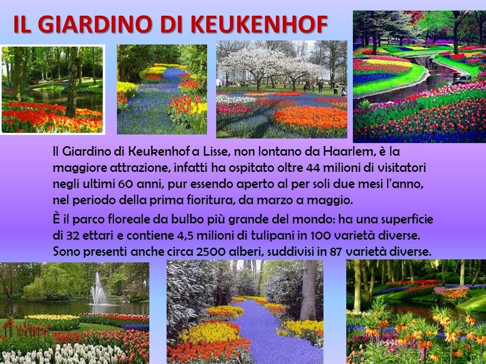 FLORICOLTURA E TURISMO I fiori, in particolare i tulipani, sono, in Olanda, unattrazione per molti turisti da tutto il mondo. I viaggi organizzati spe