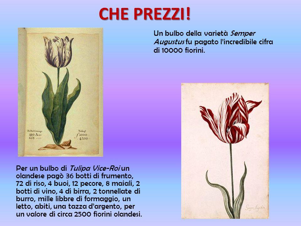 TULIPOMANIA In pochi anni gli olandesi furono presi dalla tulipomania, che non era in realtà passione per i fiori: i bulbi di tulipano diventarono mer