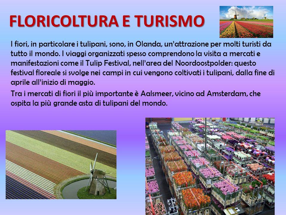 FLORICOLTURA E TURISMO I fiori, in particolare i tulipani, sono, in Olanda, unattrazione per molti turisti da tutto il mondo.