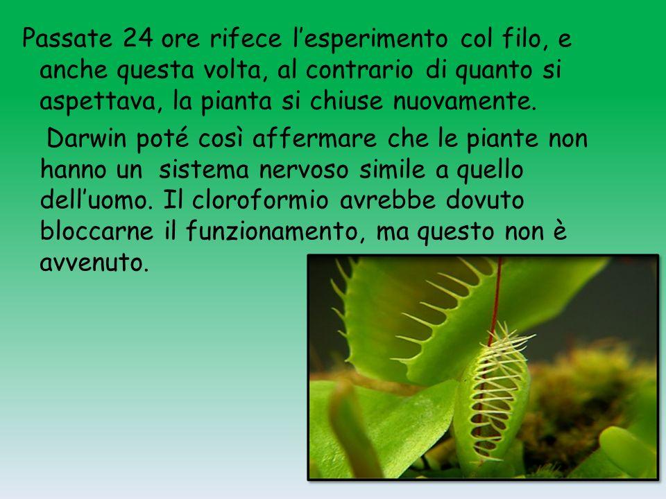 La Dionaea mucipula La venere e il suo pranzo