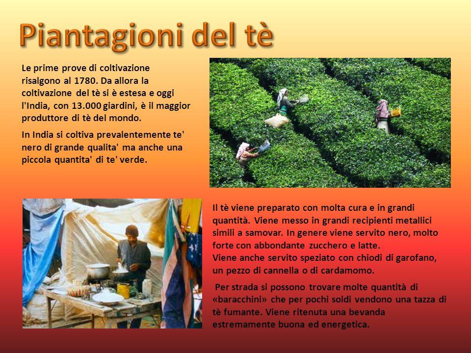 Le prime prove di coltivazione risalgono al 1780. Da allora la coltivazione del tè si è estesa e oggi l'India, con 13.000 giardini, è il maggior produ