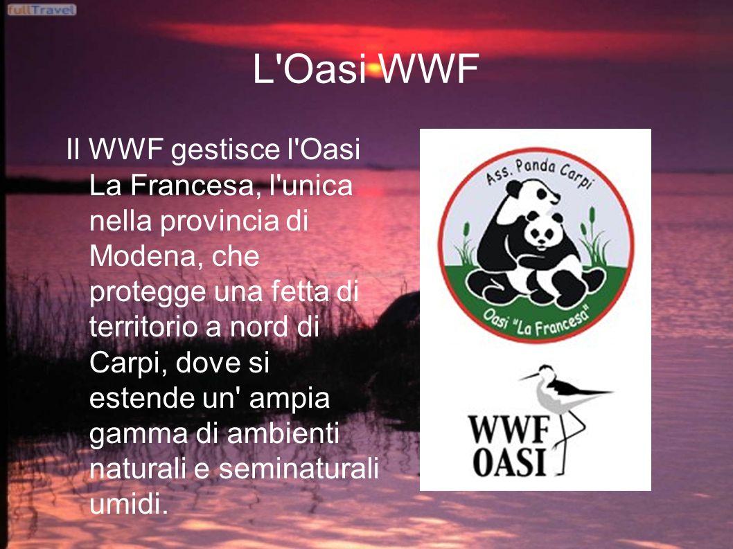 L'Oasi WWF Il WWF gestisce l'Oasi La Francesa, l'unica nella provincia di Modena, che protegge una fetta di territorio a nord di Carpi, dove si estend