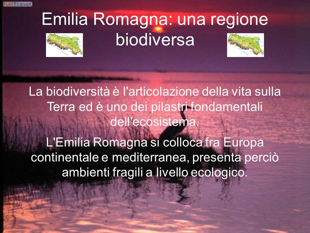 Emilia Romagna: una regione biodiversa La biodiversità è l articolazione della vita sulla Terra ed è uno dei pilastri fondamentali dell ecosistema.