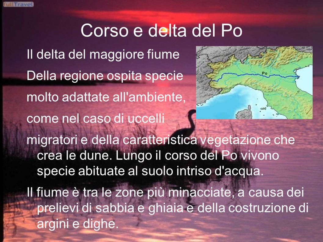 Corso e delta del Po Il delta del maggiore fiume Della regione ospita specie molto adattate all ambiente, come nel caso di uccelli migratori e della caratteristica vegetazione che crea le dune.