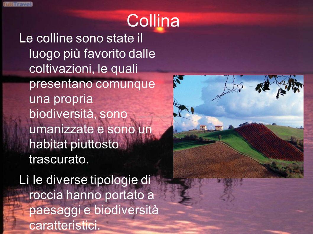 Appennino L Appennino è una sorta di ponte naturale fra Liguria e Calabria e gode perciò di un recupero naturale spontaneo.