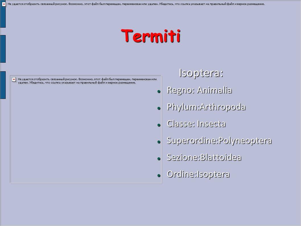 Termiti Isoptera: Isoptera: Regno:Animalia Regno:Animalia Phylum:Arthropoda Phylum:Arthropoda Classe:Insecta Classe:Insecta Superordine:Polyneoptera S