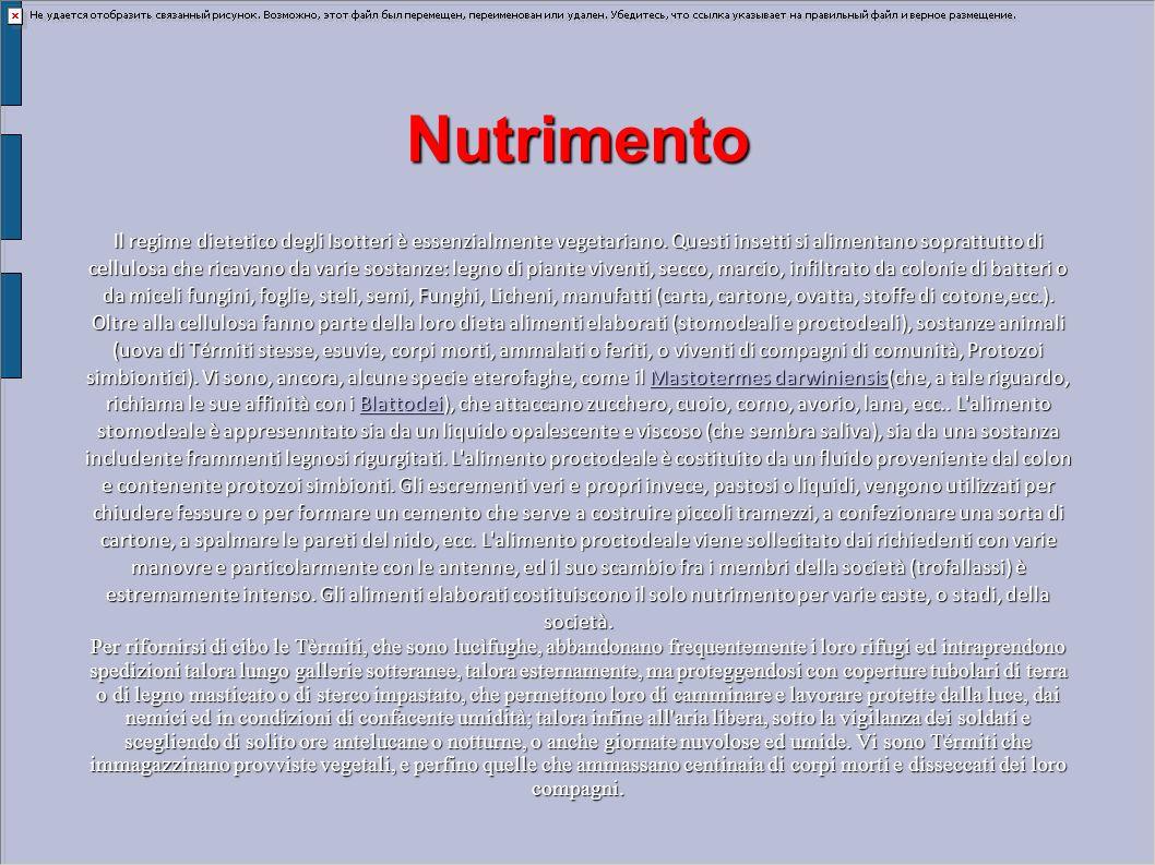 Nutrimento Il regime dietetico degli Isotteri è essenzialmente vegetariano. Questi insetti si alimentano soprattutto di cellulosa che ricavano da vari