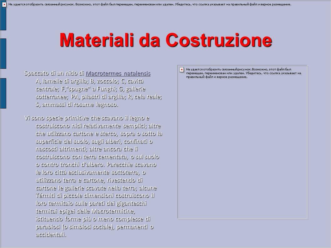 Materiali da Costruzione Spaccato di un nido di Macrotermes natalensis A, lamelle di argilla; B, zoccolo; C, cavità centrale; F,