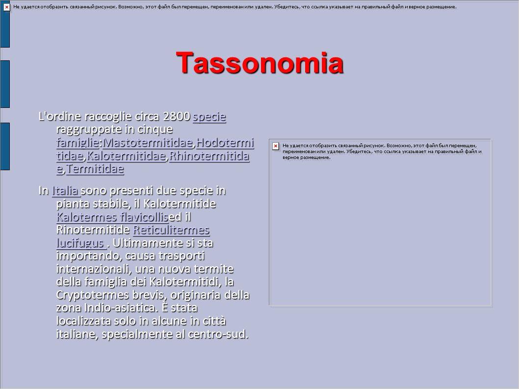 Tassonomia L'ordine raccoglie circa 2800 specie raggruppate in cinque famiglie:Mastotermitidae,Hodotermi tidae,Kalotermitidae,Rhinotermitida e,Termiti