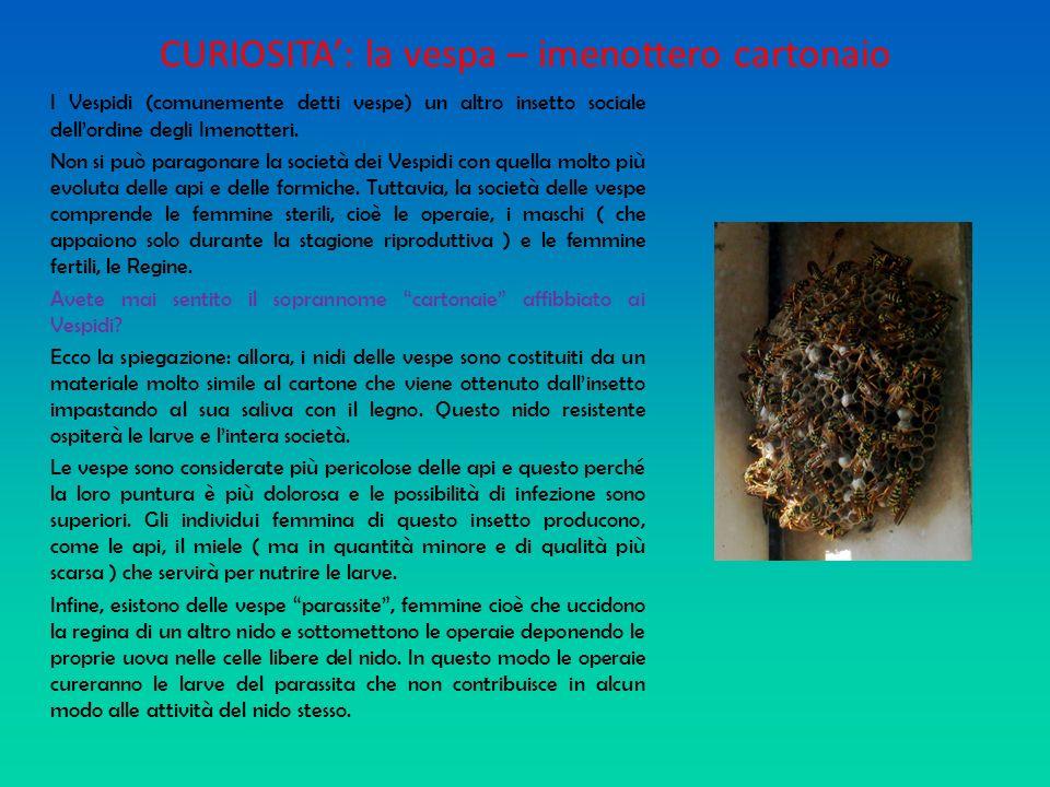 CURIOSITA: la vespa – imenottero cartonaio I Vespidi (comunemente detti vespe) un altro insetto sociale dellordine degli Imenotteri. Non si può parago