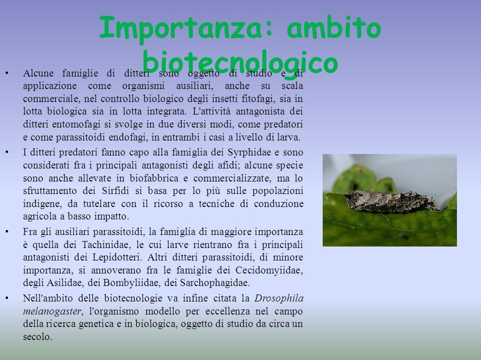 Importanza: ambito biotecnologico Alcune famiglie di ditteri sono oggetto di studio e di applicazione come organismi ausiliari, anche su scala commerc