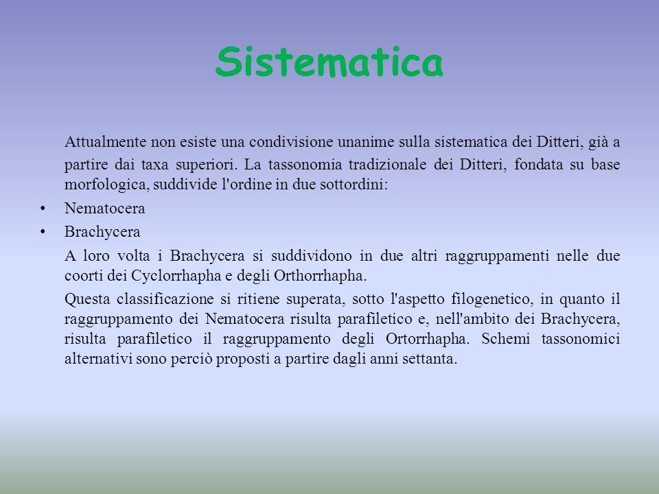 Sistematica Attualmente non esiste una condivisione unanime sulla sistematica dei Ditteri, già a partire dai taxa superiori. La tassonomia tradizional