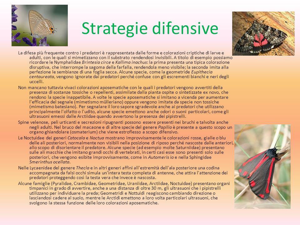 Strategie difensive La difesa più frequente contro i predatori è rappresentata dalle forme e colorazioni criptiche di larve e adulti, con le quali si