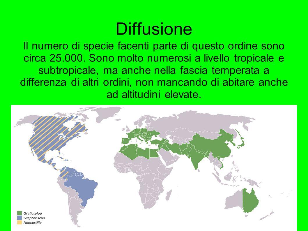Diffusione Il numero di specie facenti parte di questo ordine sono circa 25.000. Sono molto numerosi a livello tropicale e subtropicale, ma anche nell