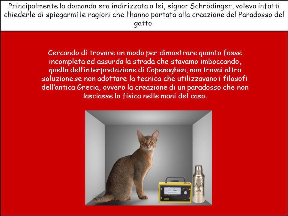 Principalmente la domanda era indirizzata a lei, signor Schrödinger, volevo infatti chiederle di spiegarmi le ragioni che lhanno portata alla creazione del Paradosso del gatto.