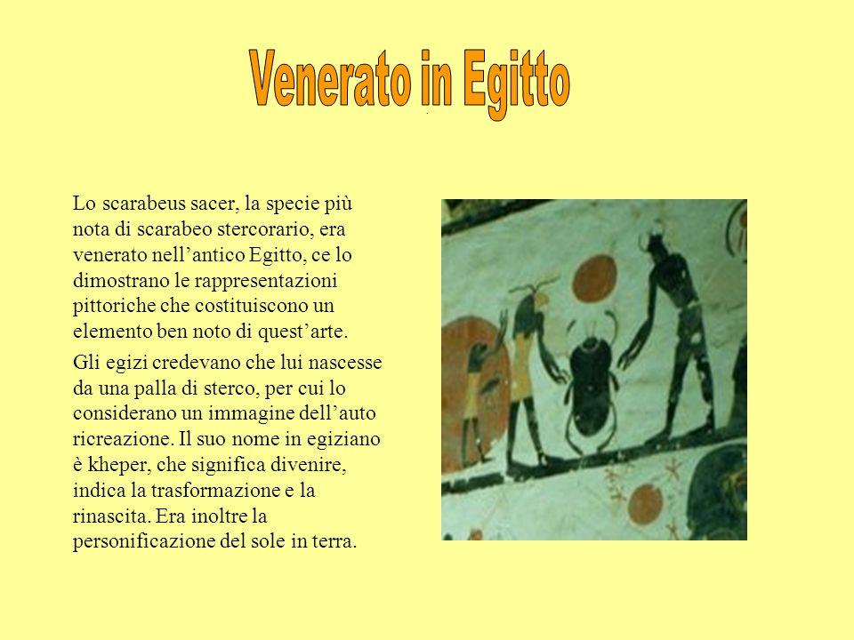 . Lo scarabeus sacer, la specie più nota di scarabeo stercorario, era venerato nellantico Egitto, ce lo dimostrano le rappresentazioni pittoriche che