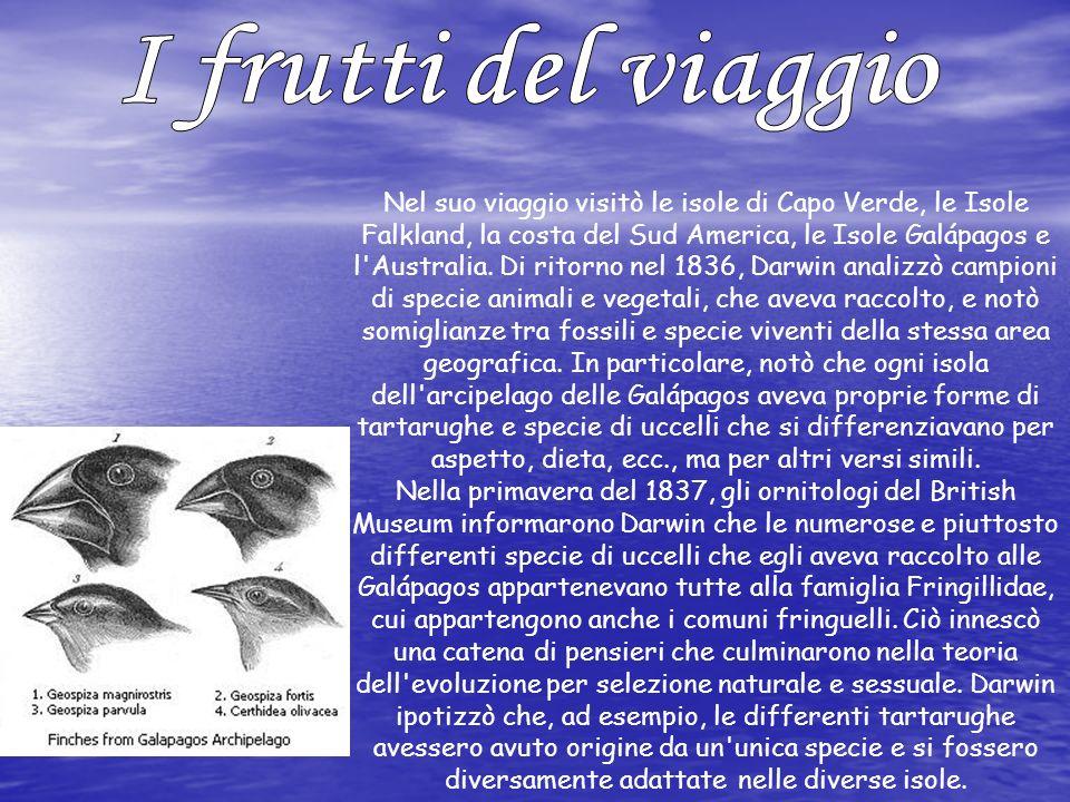 Nel suo viaggio visitò le isole di Capo Verde, le Isole Falkland, la costa del Sud America, le Isole Galápagos e l'Australia. Di ritorno nel 1836, Dar