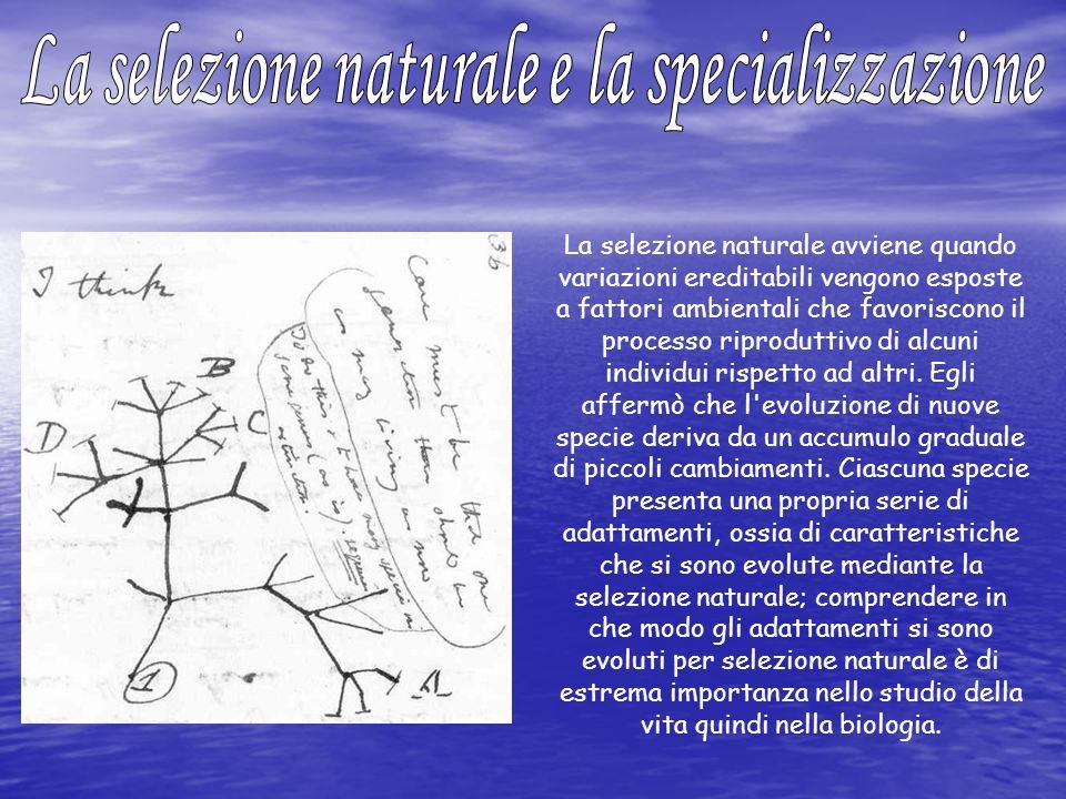 La selezione naturale avviene quando variazioni ereditabili vengono esposte a fattori ambientali che favoriscono il processo riproduttivo di alcuni in