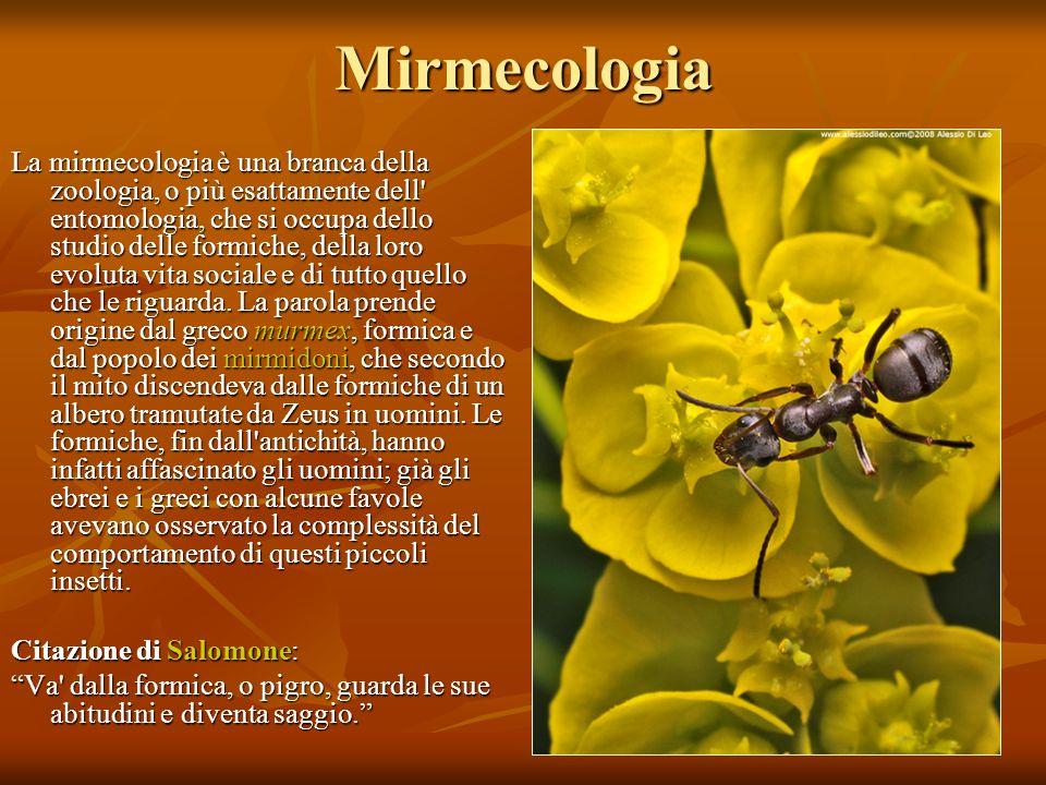 Mirmecologia La mirmecologia è una branca della zoologia, o più esattamente dell' entomologia, che si occupa dello studio delle formiche, della loro e