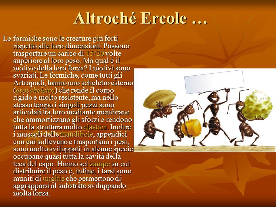 Altroché Ercole … Le formiche sono le creature più forti rispetto alle loro dimensioni. Possono trasportare un carico di 15/20 volte superiore al loro