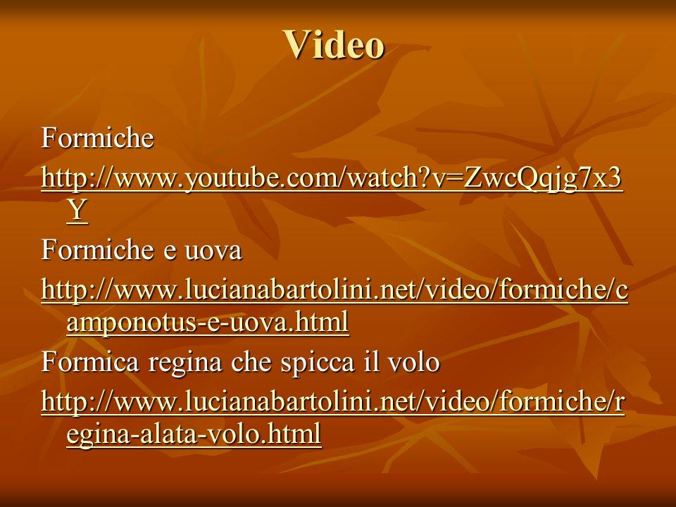 VideoFormiche http://www.youtube.com/watch?v=ZwcQqjg7x3 Y http://www.youtube.com/watch?v=ZwcQqjg7x3 Y Formiche e uova http://www.lucianabartolini.net/